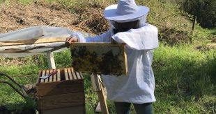 beginner beekeepers