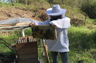 beginner beekeepers